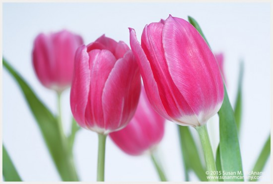 Tulip Love on Etsy