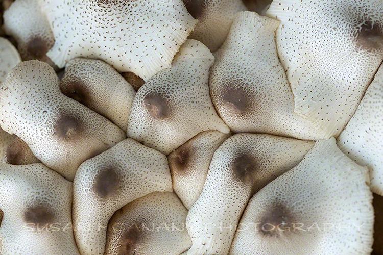 macro photography and mushrooms