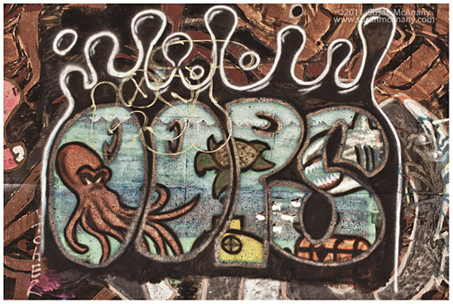 graffiti art photograph sea life